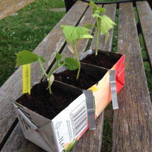semis jardin potager