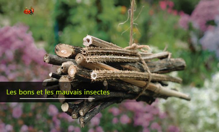 Les bons et les mauvais insectes du potager