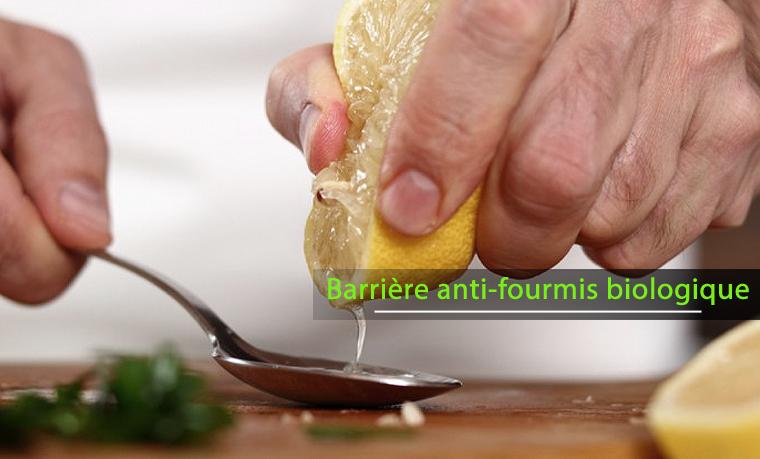 Réaliser une barrière biologique anti-fourmis